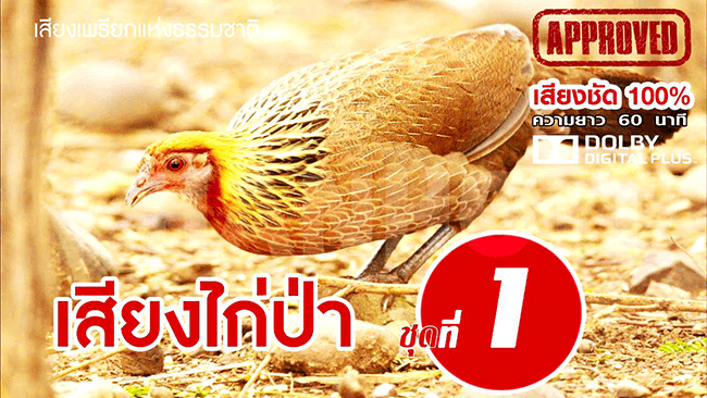 junglefowl female 1